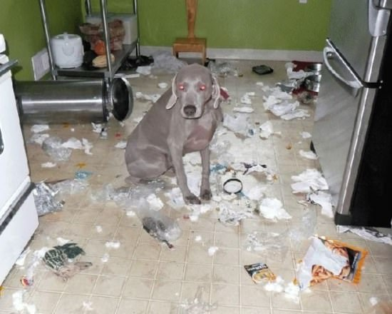 Destructive Dogs 10
