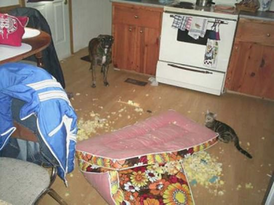 Destructive Dogs 15