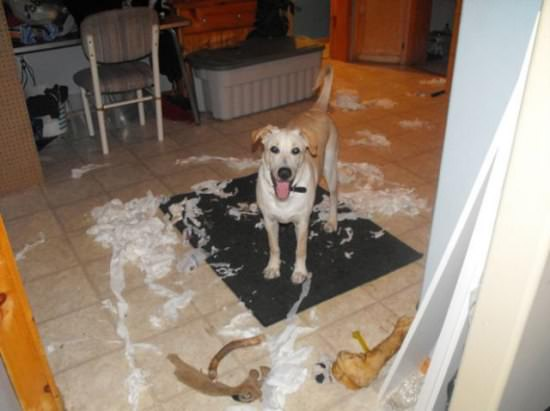 Destructive Dogs 19