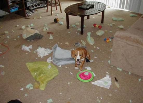 Destructive Dogs 3