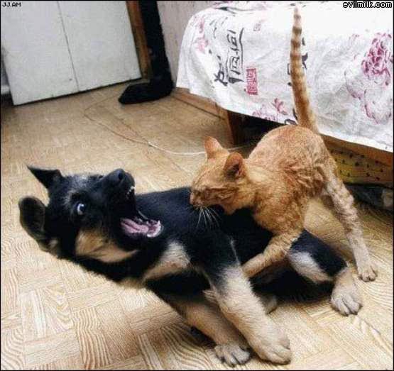 Cat_Bite.jpg