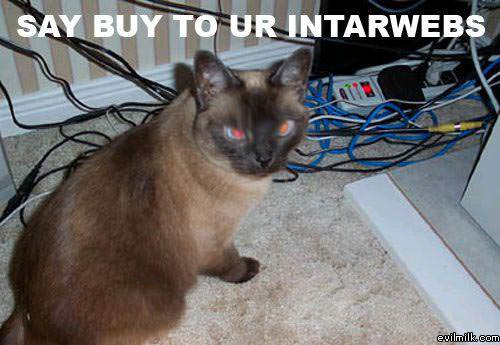 Cat Eat Wires