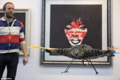 Cat - vtipný obrázok - Kalerab.sk