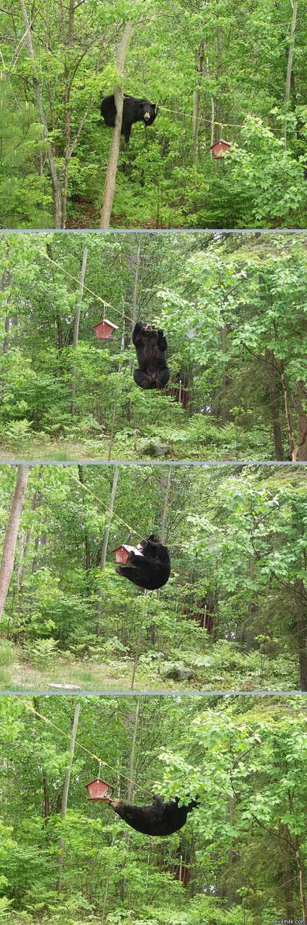 Determined_Bear.jpg