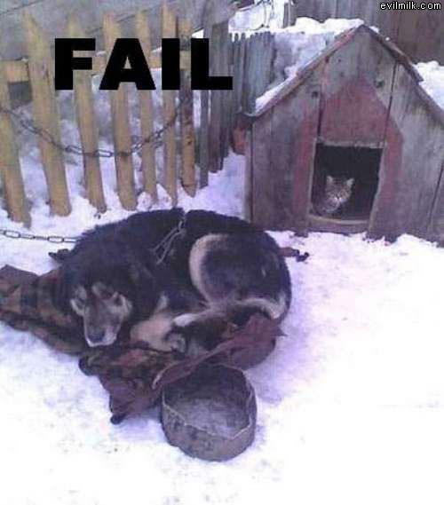 Dog_Failed.jpg