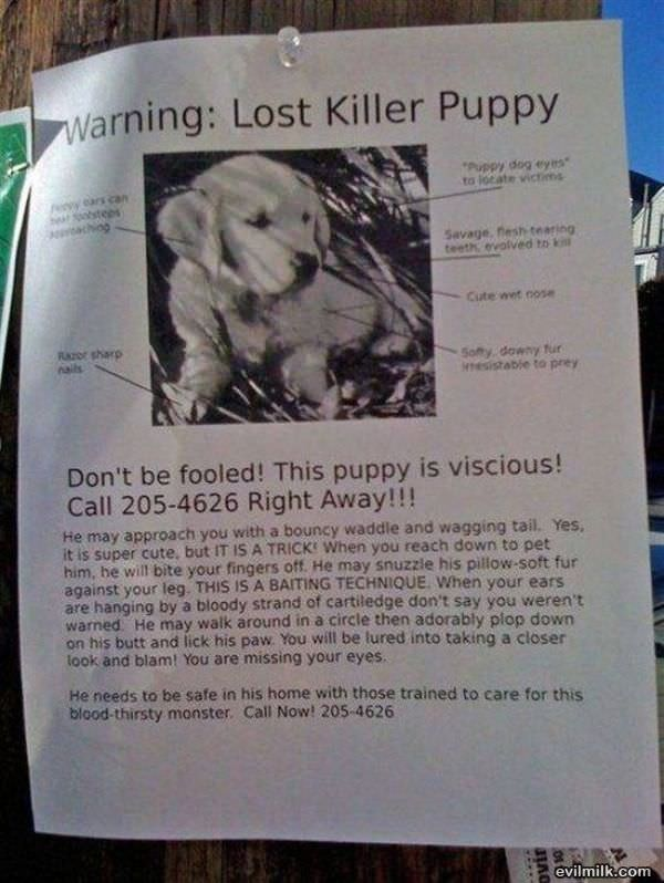 Lost Puppy