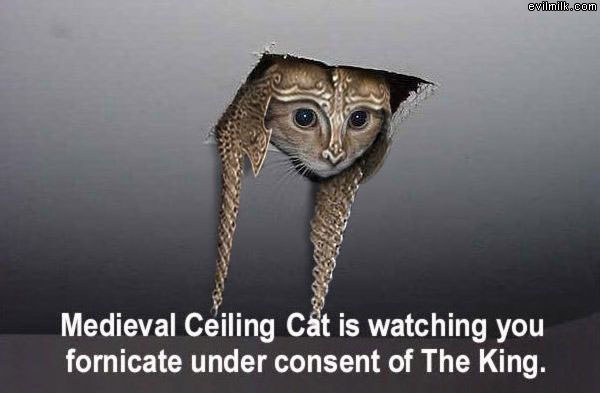 Medieval_Cat.jpg