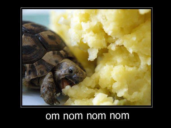 Om_Nom_Nom.jpg