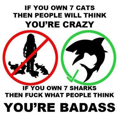 Funny shit Sharks_Vs_Cats