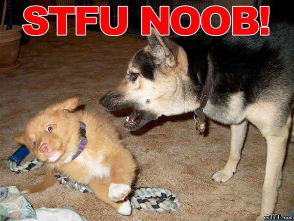 Stfu Noob341