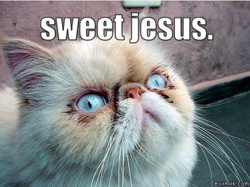 sweet jesus cat