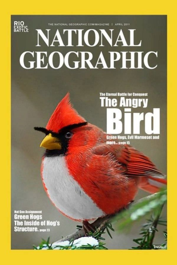 Worth a watch, but not worth its own thread. - Page 3 The_Angry_Bird