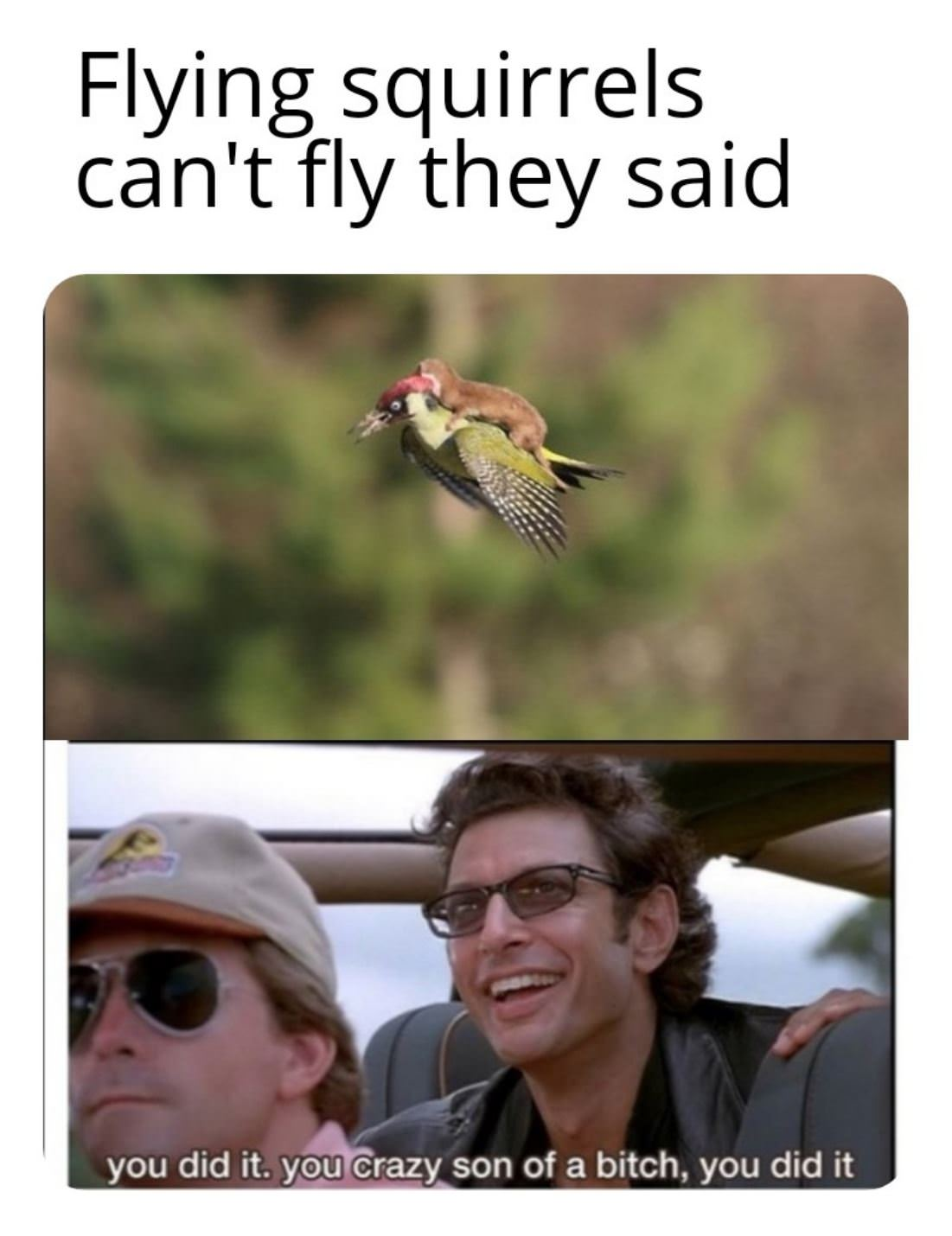They Cannot Fly