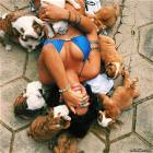 All These Puppies