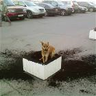 Digging Dog