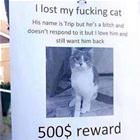Lost My Kitty