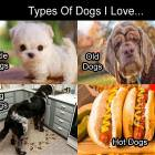Types Of Dogs I Like